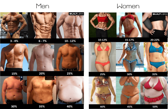 body_fat_percentage_estimate